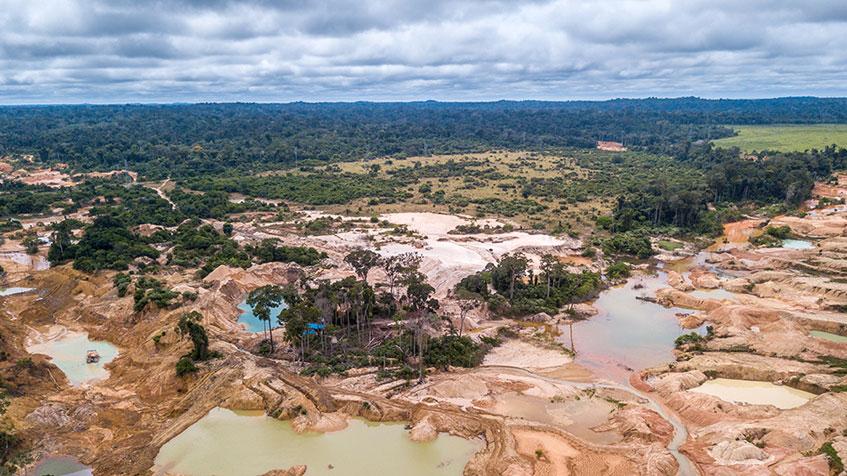 Quali sono le conseguenze della deforestazione dell'Amazzoni...