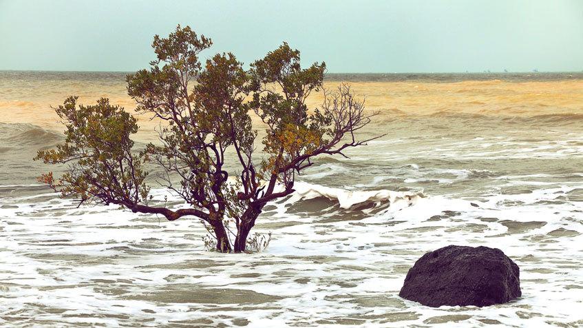 Riscaldamento globale: di quanto sarà l'innalzamento dei mari?