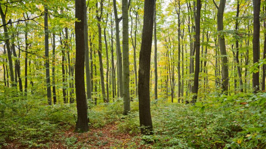 che cos'è la silvicoltura, vantaggi