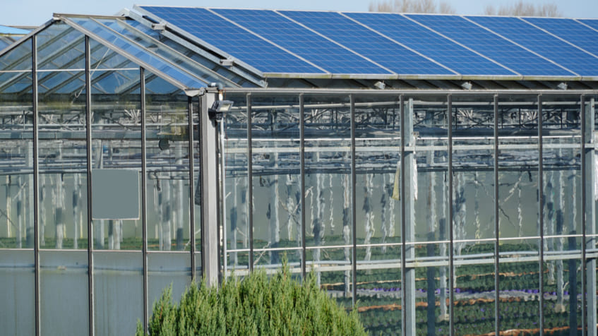 Cosa coltivare in una serra fotovoltaica?